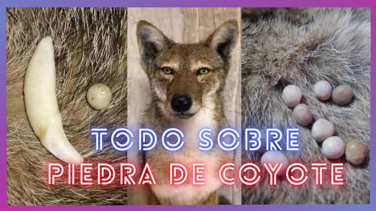 Todo lo que necesitas saber sobre la piedra de coyote